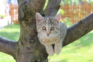 Katze in Steuden